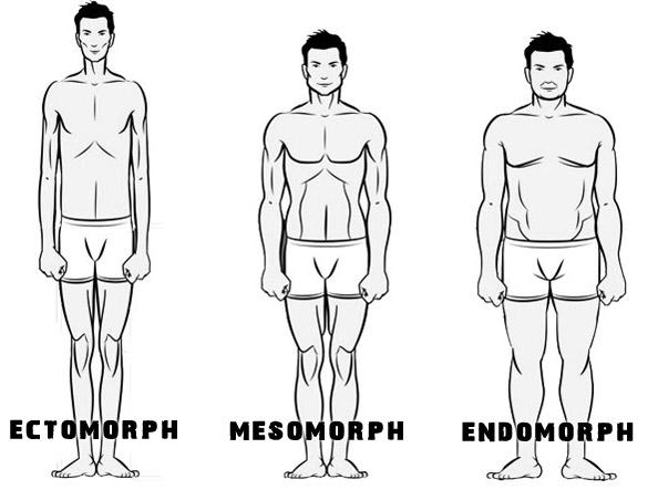 Die drei Körpertypen dargestellt
